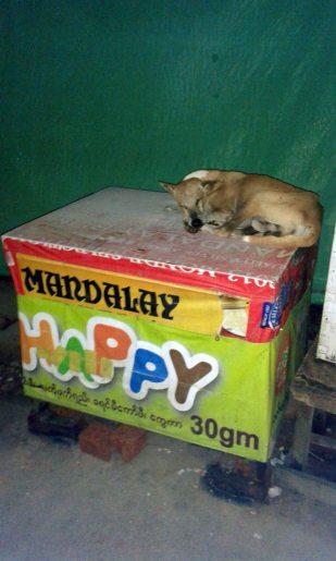 Happy sleeping dog, 38th Street